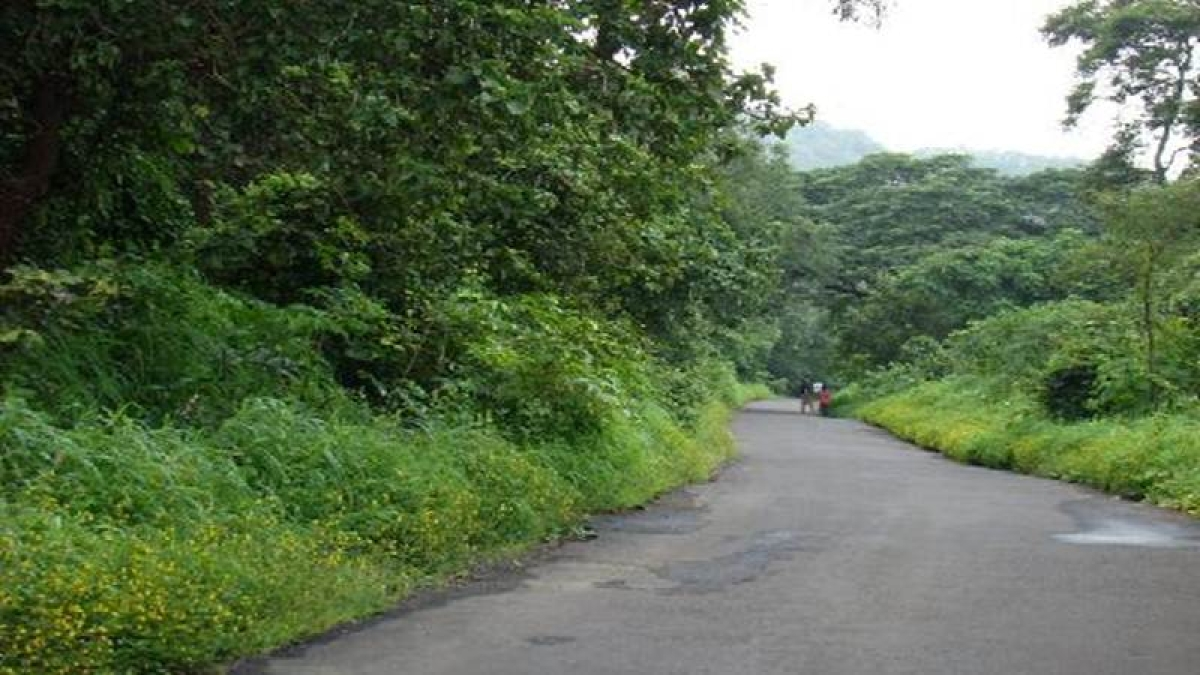 Mumbai: No entry fee to national park on Environment Day