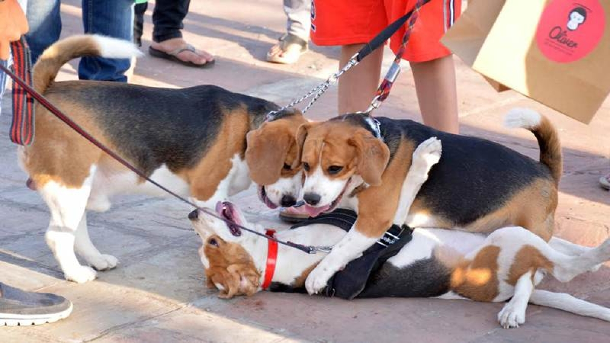 Bow Wows and Tail Wags At Dog A'Fair