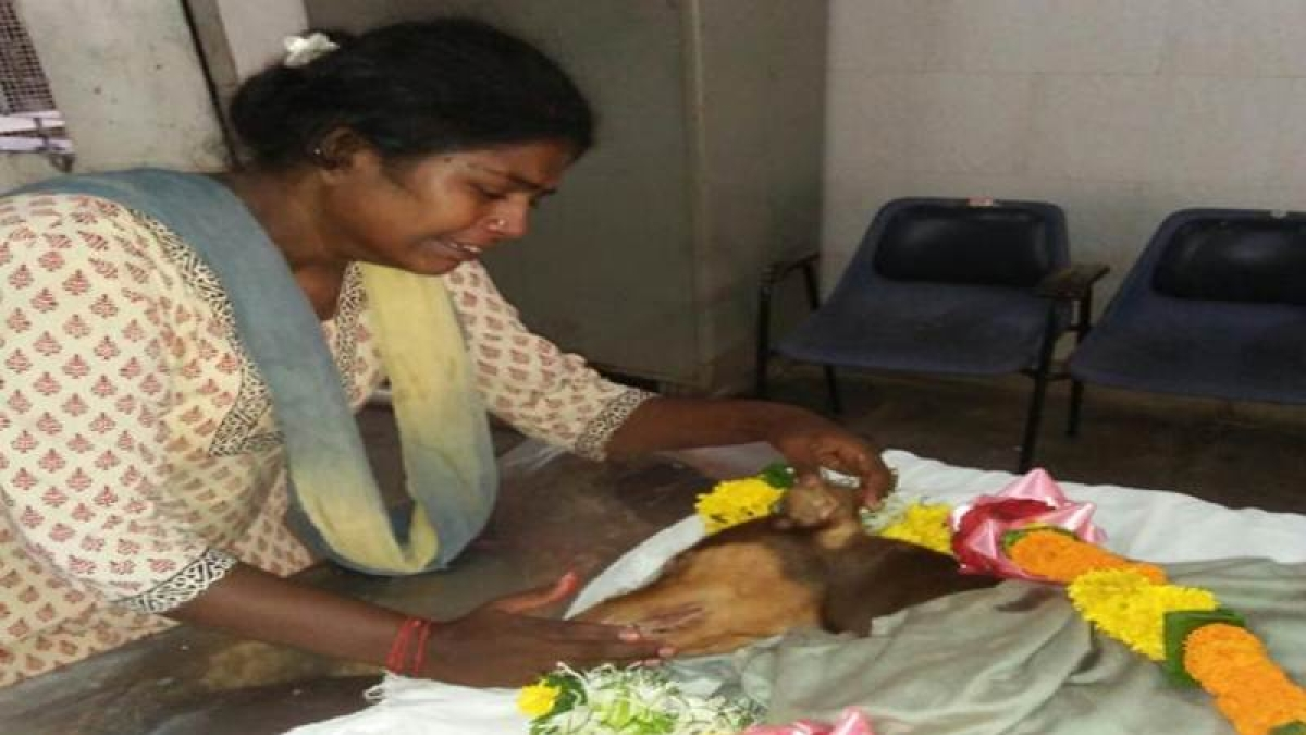 Touching: Dog in Mumbai sacrifices life to save owner from killer