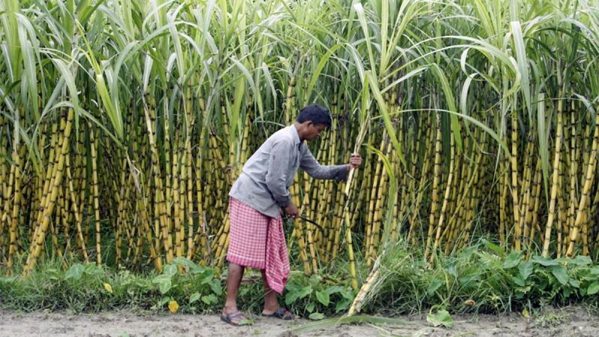 Sugar Lobby: 16 ministers in Maha cabinet associated with sugar industry