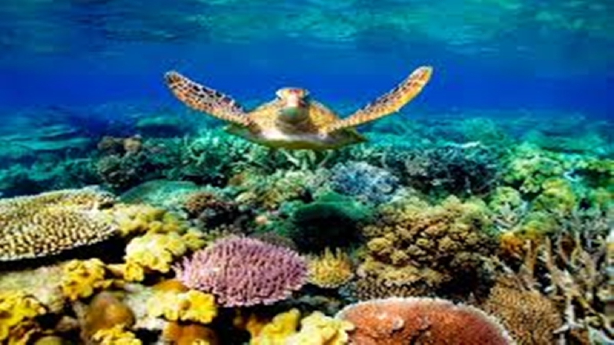 Two-thirds of Great Barrier Reef damaged