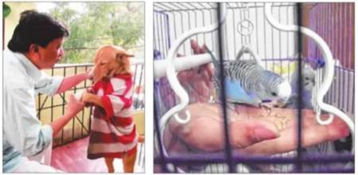Indore: 'Set animals, birds free to prove love'