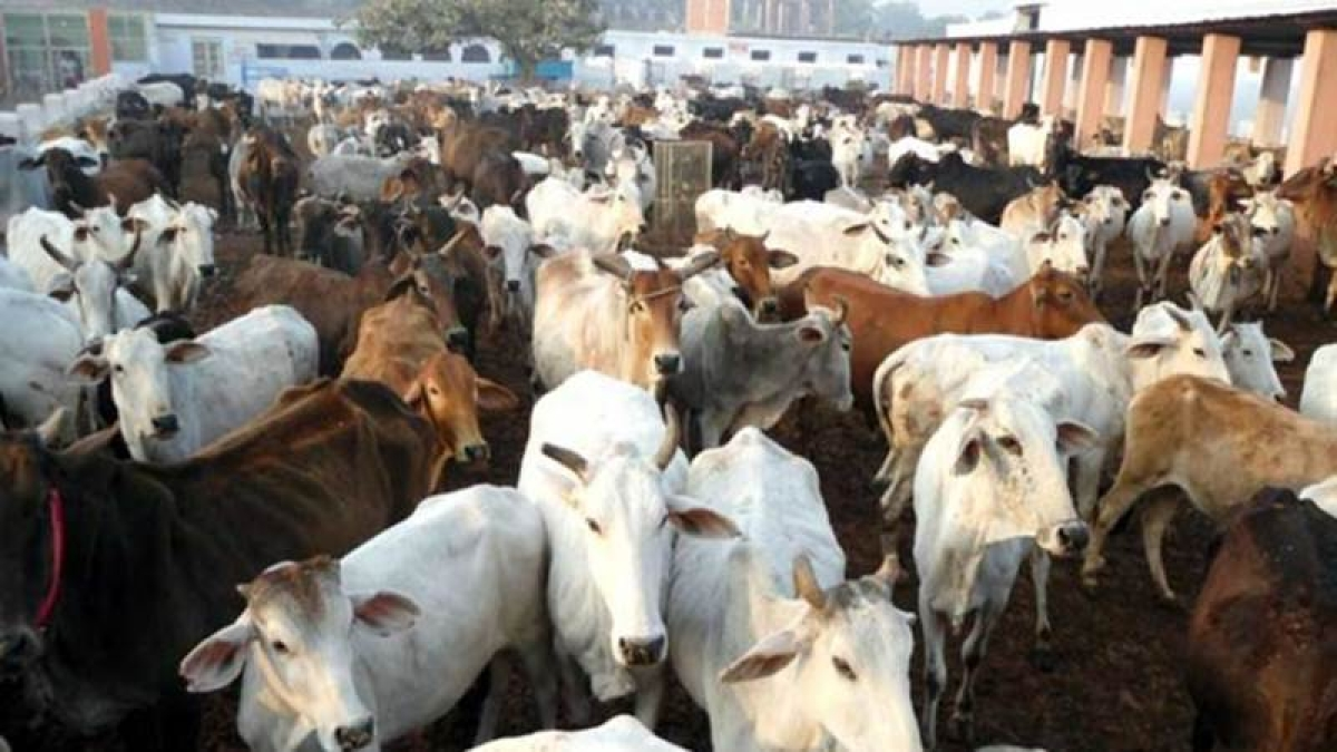 Centre tells Supreme Court that ban on cattle trade for slaughter is to regulate market