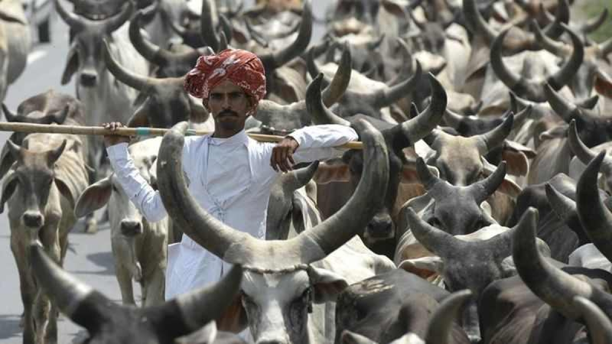 Haryana to act against illegal slaughterhouses from May 15