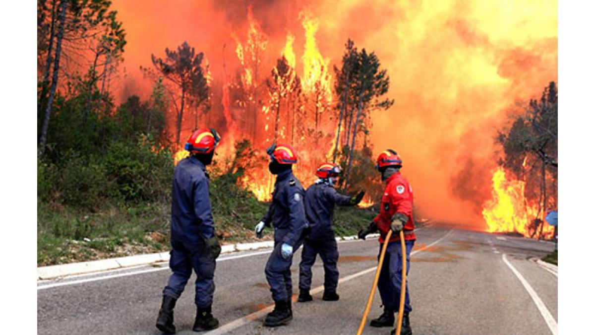 62 die in devastating forest fire in Portugal, 50 injured