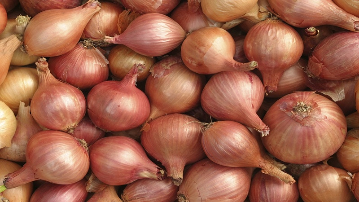 Bhopal: Onions to be sold outside state too