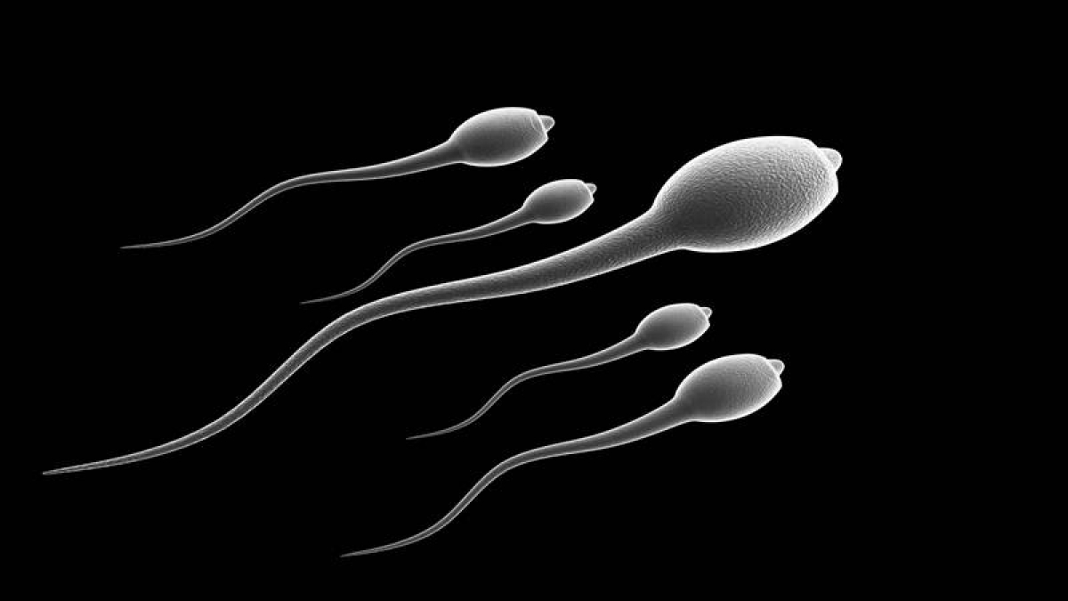 FPJ Special: Coming Soon – Sperm bank for cancer patients