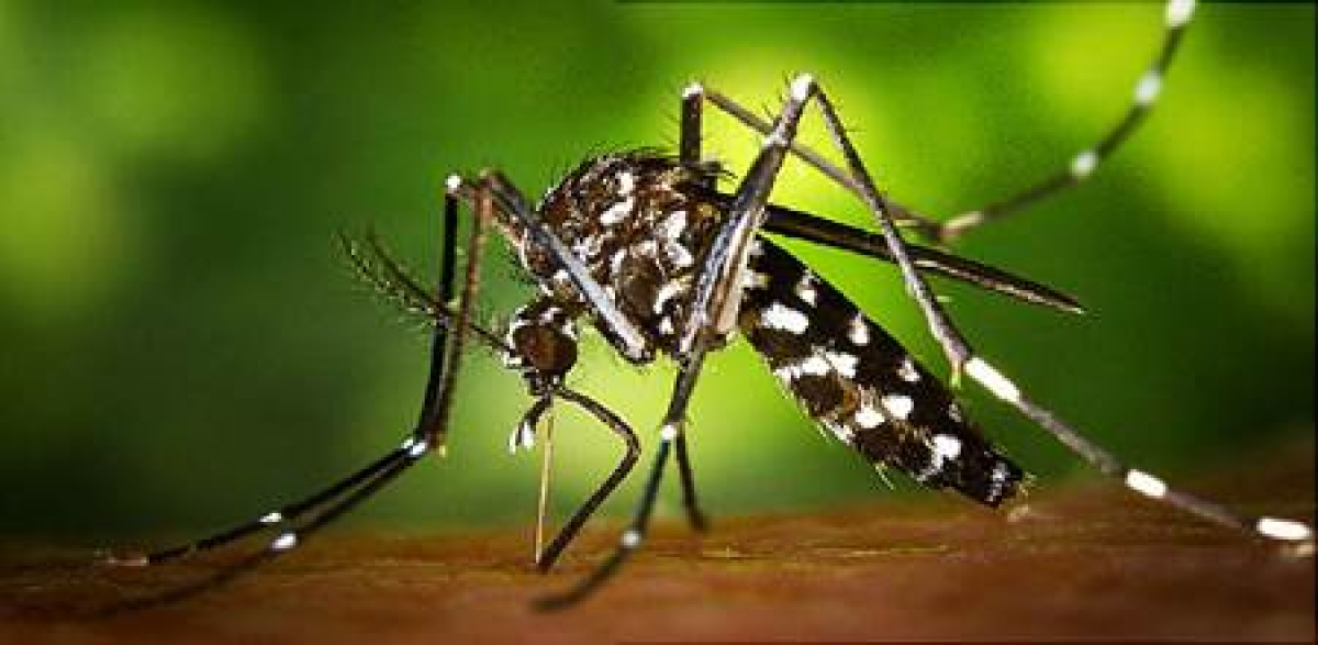 Bhopal: Health ministry shares guidelines to prevent possible spread of Zika