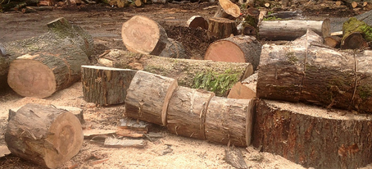 MMRC wants residents to 'adopt' trees cut to make way for Metro