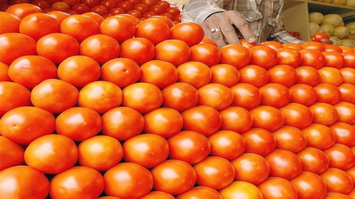 Maharashtra: Less production makes tomatoes out of reach