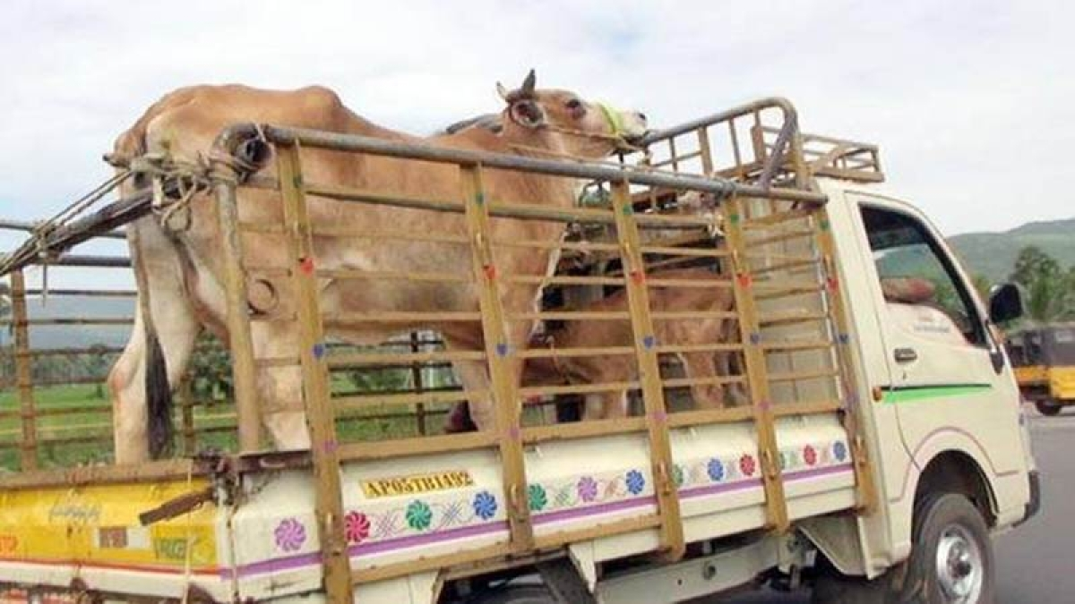 Maharashtra rocked by three beef-related incidents