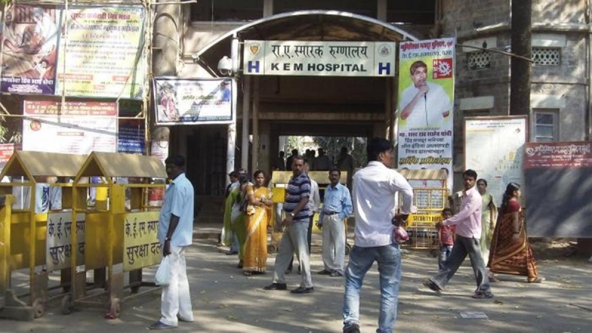 Mumbai: Cat drags away foetus at KEM