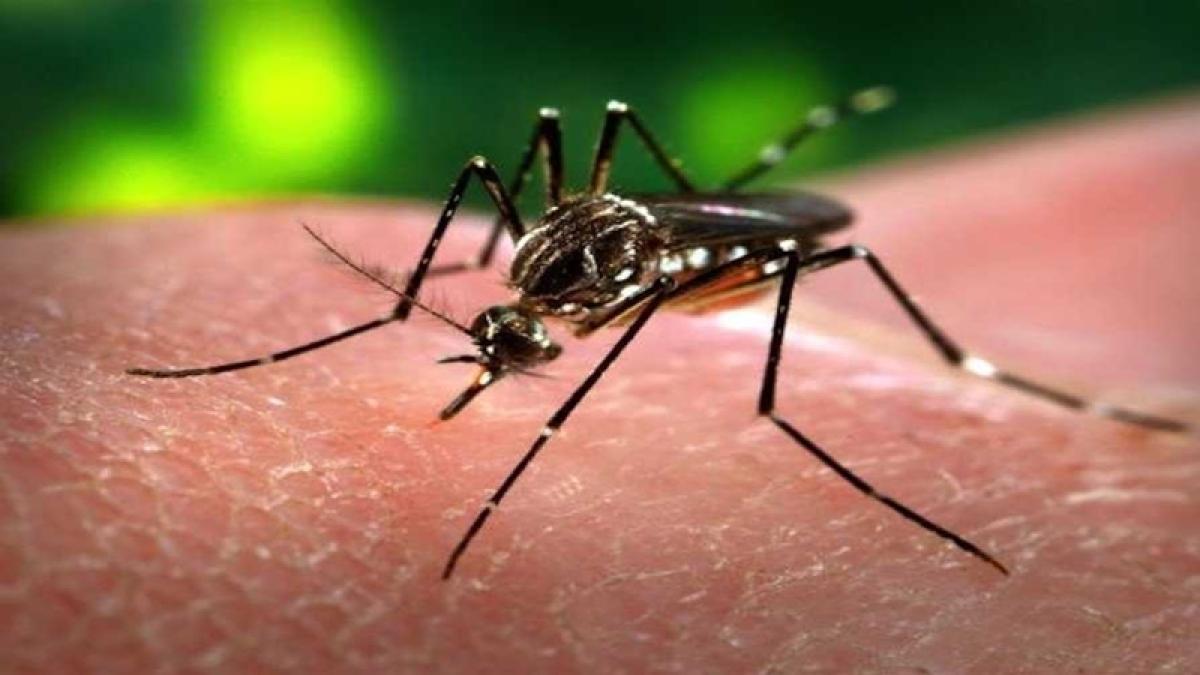 2 die of malaria in Mumbai, three more deaths under scanner