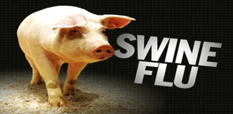 Swine fever kills nearly five million pigs in a year, says UN