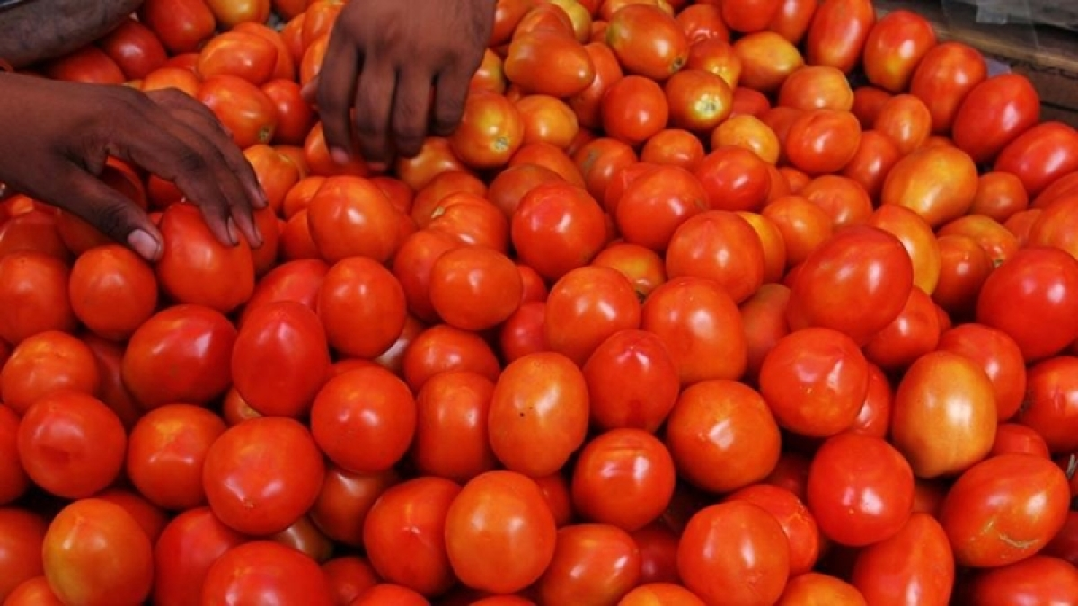 Indore: 'Barter POK for fresh tangy red tomato'