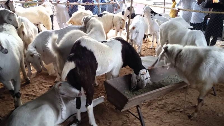 Eid al-Adha 2017: Buy online Bakra for this Eid, check out