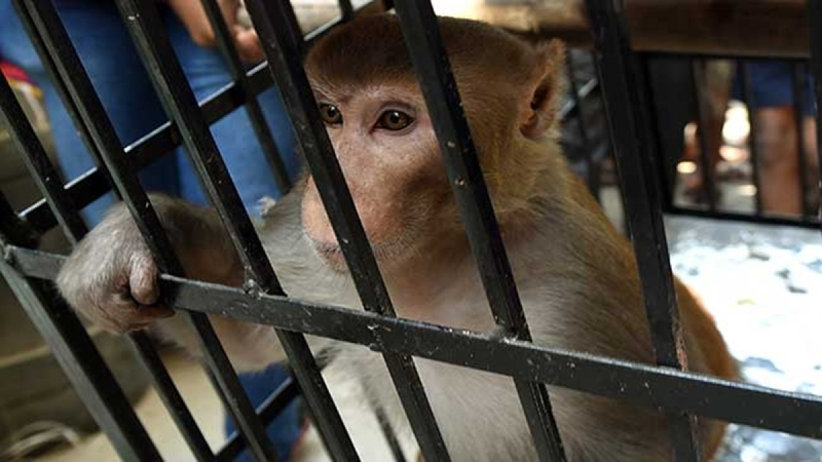 Mumbai: Woman scared train commuters with monkey, extorted money from them