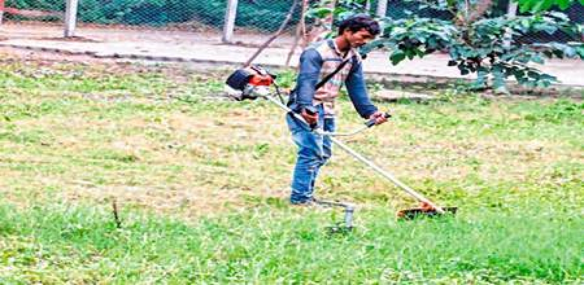Indore: Swachh Survey: IMC lends helping hand to DAVV in maintaining cleanliness
