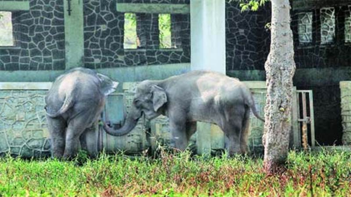 Mumbai: As many as 77 animals died at Byculla Zoo in 2016-17