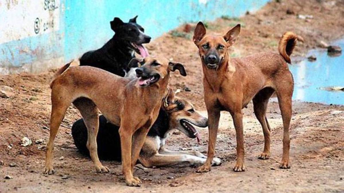Mumbai Veterinary Hospital Data: 80 percent dogs, cats, birds falling sick due to scorching heat