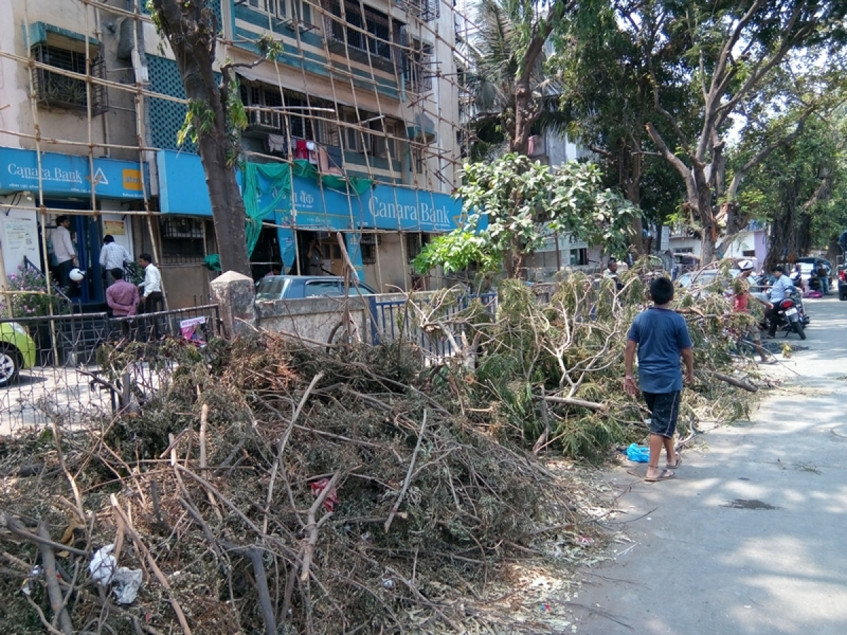 Mumbai: BMC gets 1,741 tree-cutting notices in 6 months