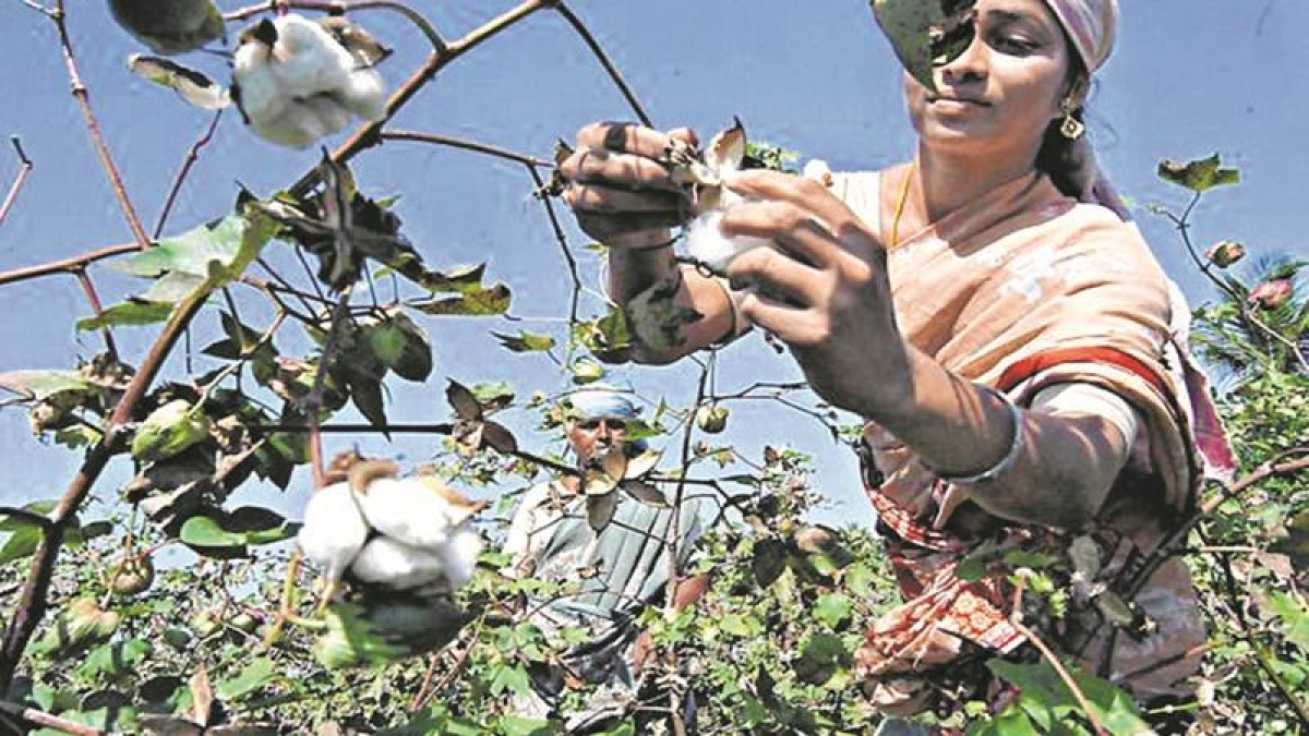 18 farmers 'lose lives to pesticide poisoning' in Vidarbha region