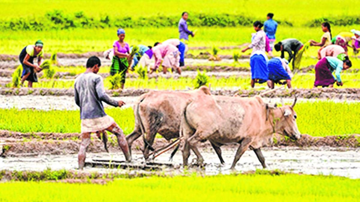 Bhopal: Loan waiver exposes  scam in coop societies