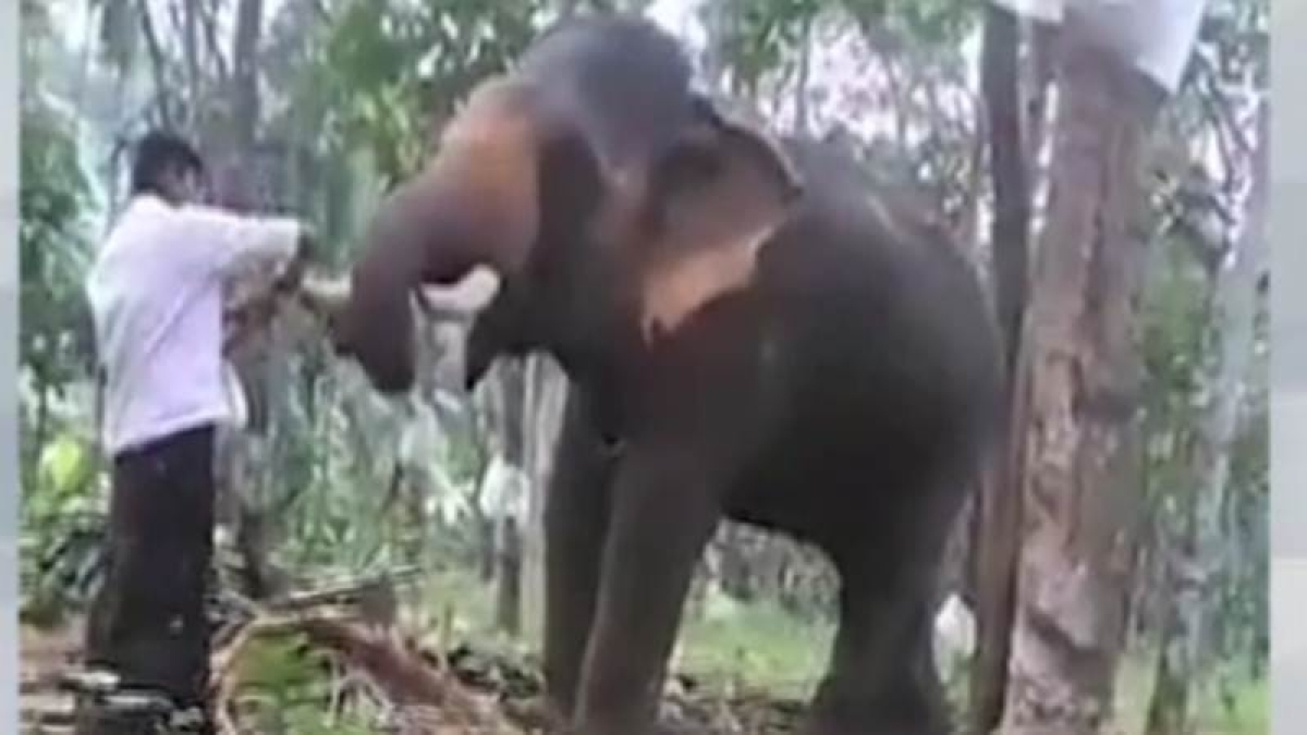Viral Video: Kerala Baahubali tries an elephant stunt, get flung in the air