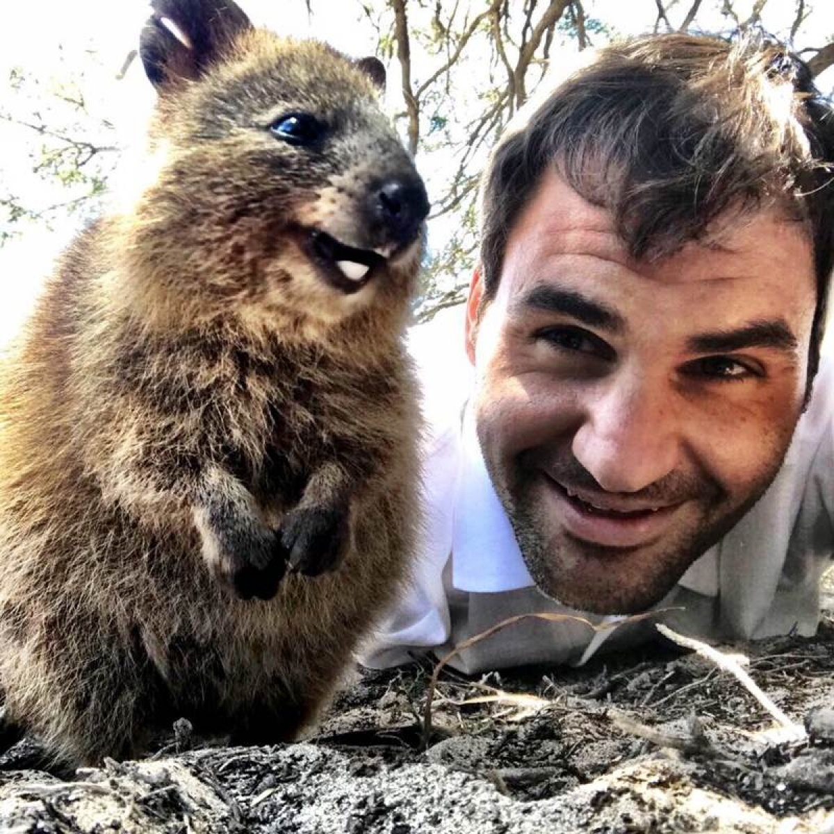 See photos: Tennis legend Roger Federer clicks adorable selfie with quokkas and it goes viral