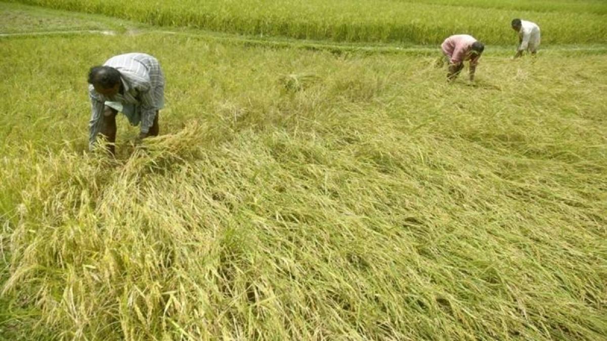 Farmers' crop insurance scheme bigger scam than Rafale deal, claims activist