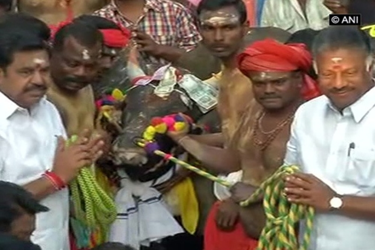 Tamil Nadu CM Palaniswami, Dy. CM Panneerselvam reaches Madurai for Jallikattu event