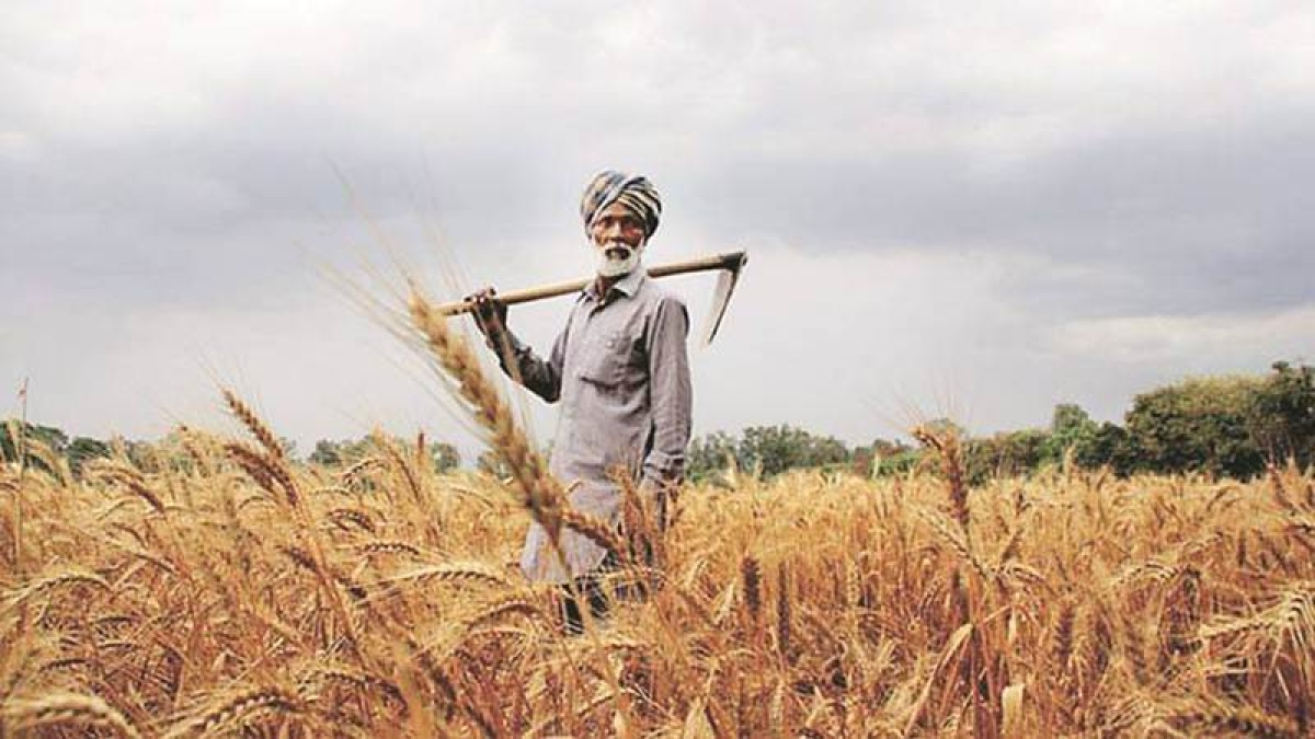 Farm loan waivers to touch USD 40 billion by 2019 Lok Sabha elections: Report