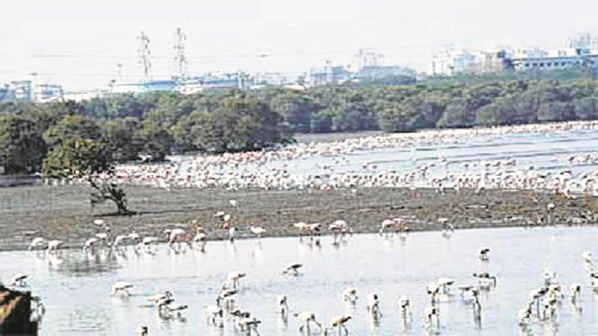 Can reclamation be allowed on wetlands? Bombay HC asks Maharashtra govt