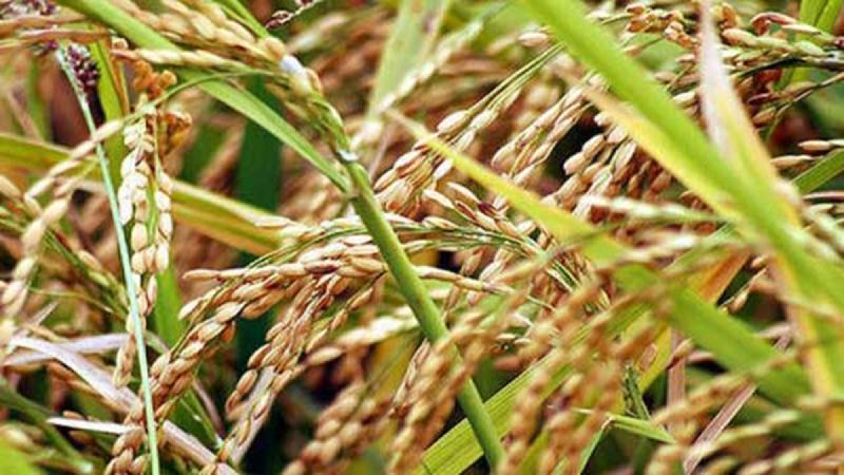 New MSP for kharif crops, high return