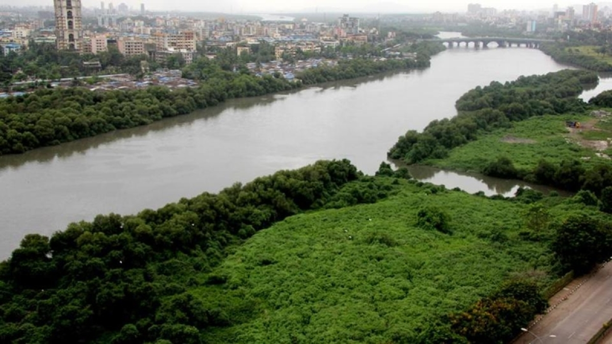 Restoring the green cover: 133 hectares more under mangroves in Mumbai
