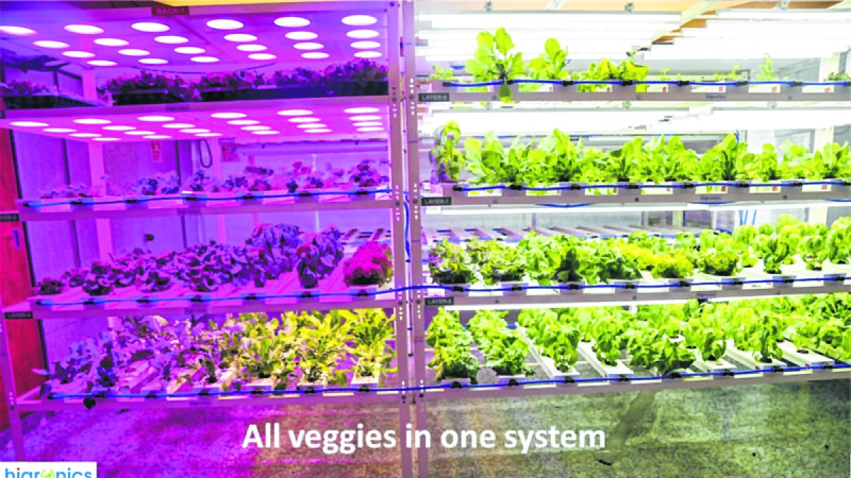 Hydroponics: The future of agriculture