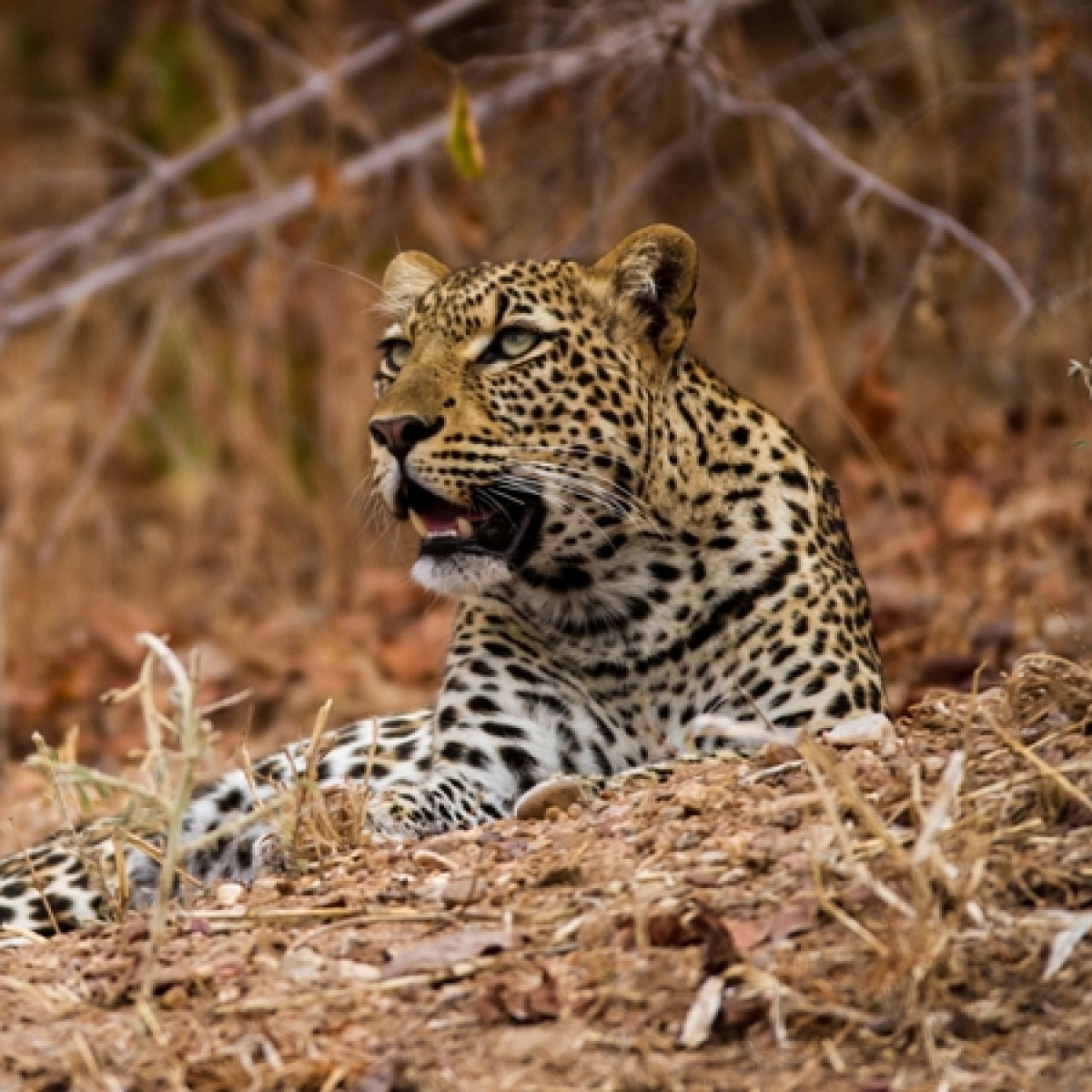 Amid COVID-19 outbreak; Maharashtra sees rise in poaching and wildlife crimes