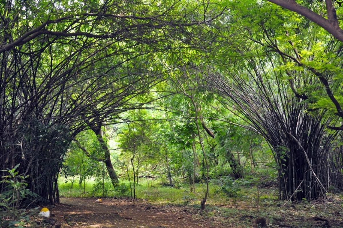 Mumbai: Mahim Nature Park will remain forest land, will not be included under Dharavi Redevelopment Project