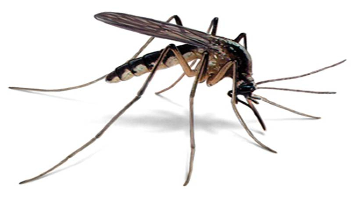 How to put a full stop to mosquito birth