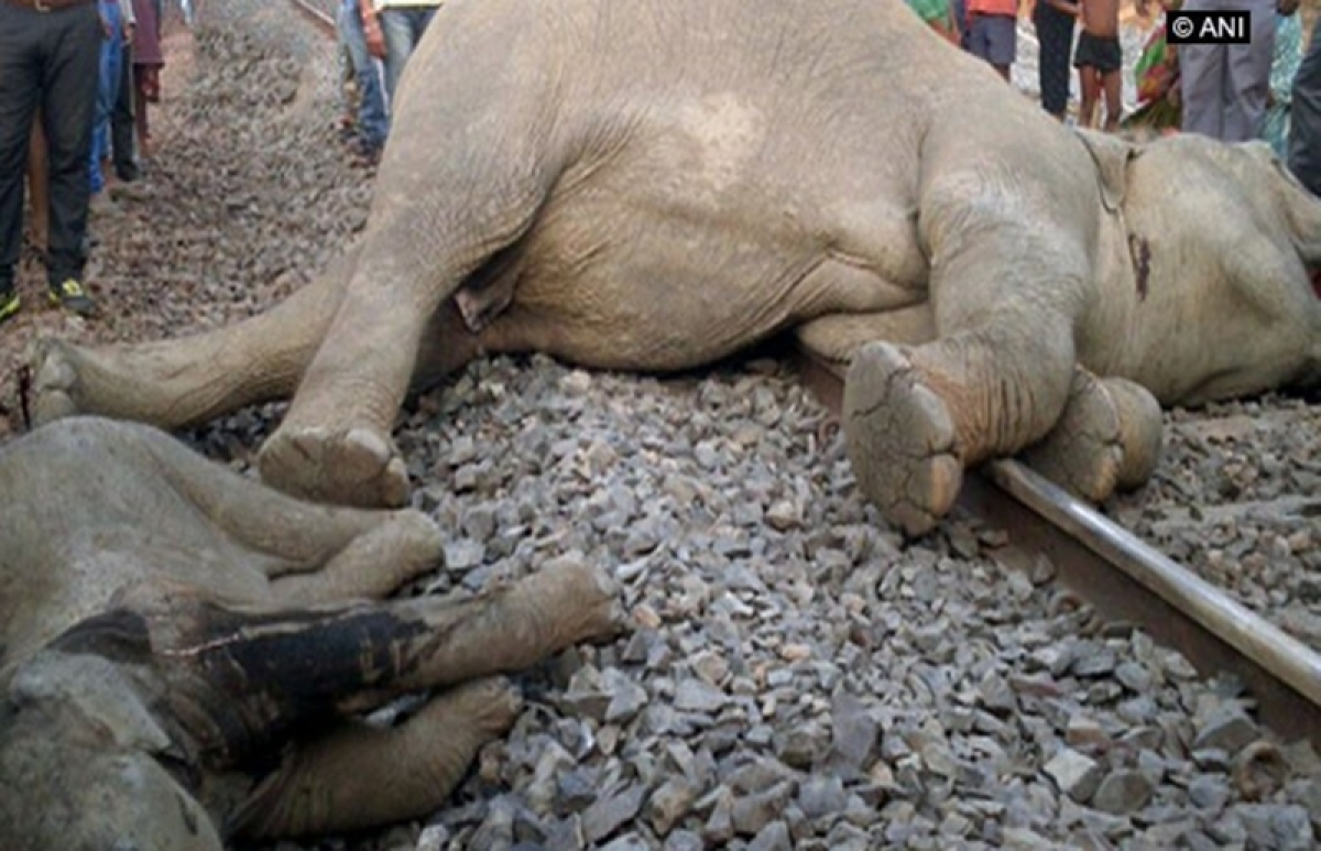 Odisha: 4 elephants, including a calf, killed after goods train runs over them