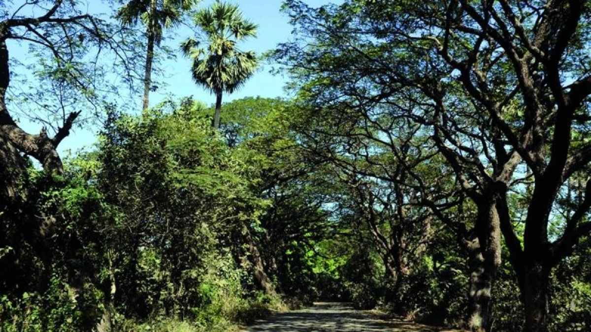 Mumbai: 112 officials not qualified enough to take care of over 25 lakhtrees, fear tree activists