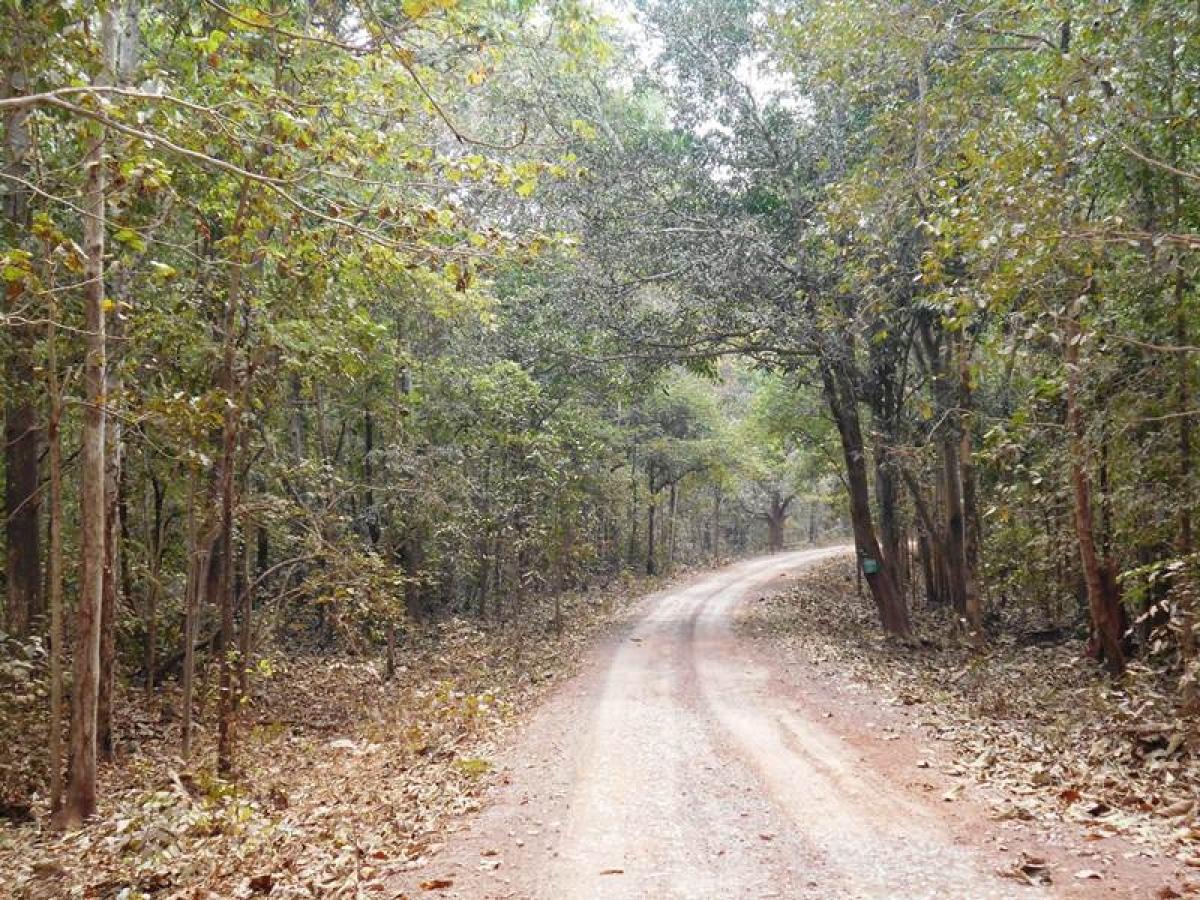 Daring to delve into Dantewada, an 'idyllic hinterland'