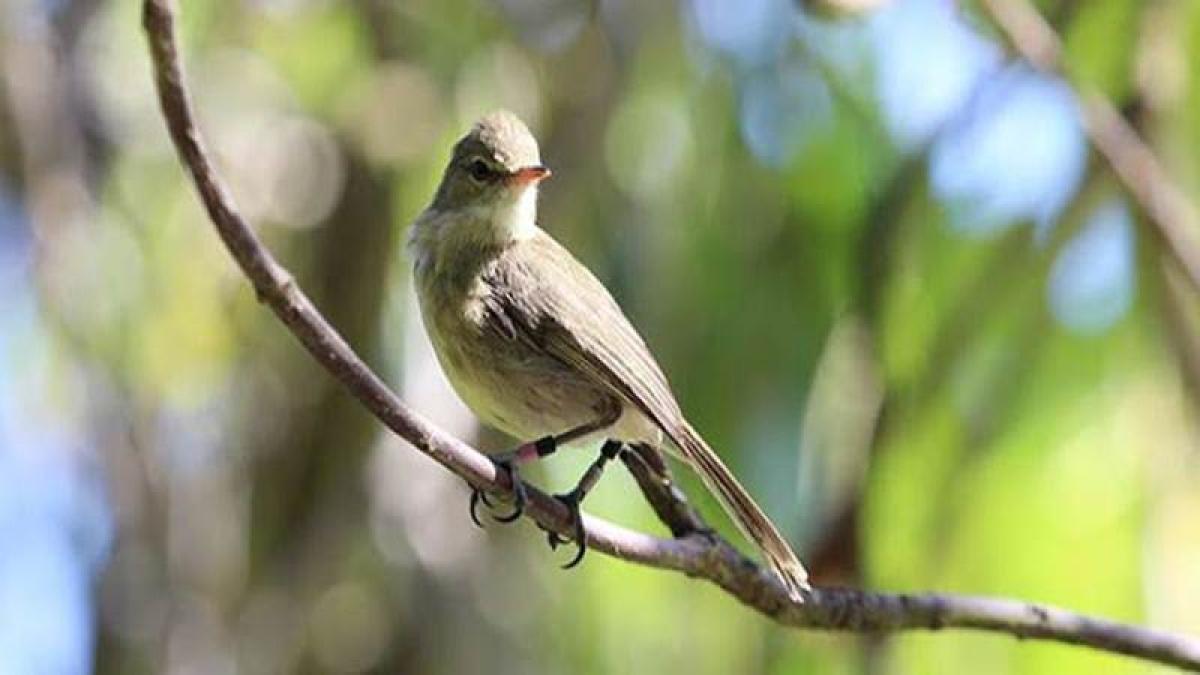 Birds may have complex hierarchical societies