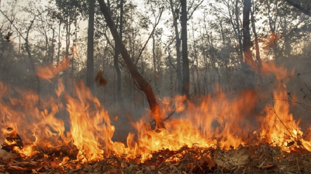 Thousands of trees are set ablaze yet again
