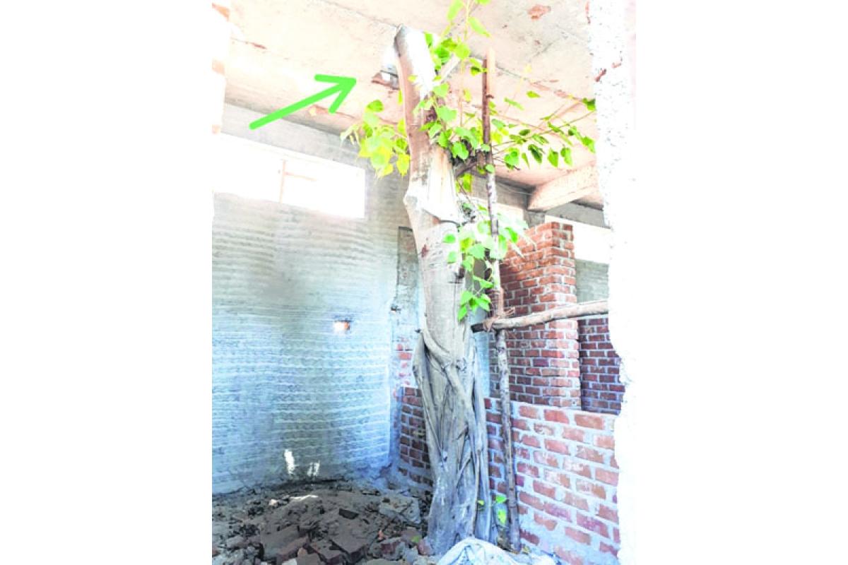 Mumbai: BMC constructs public toilet in civic hospital and saves tree