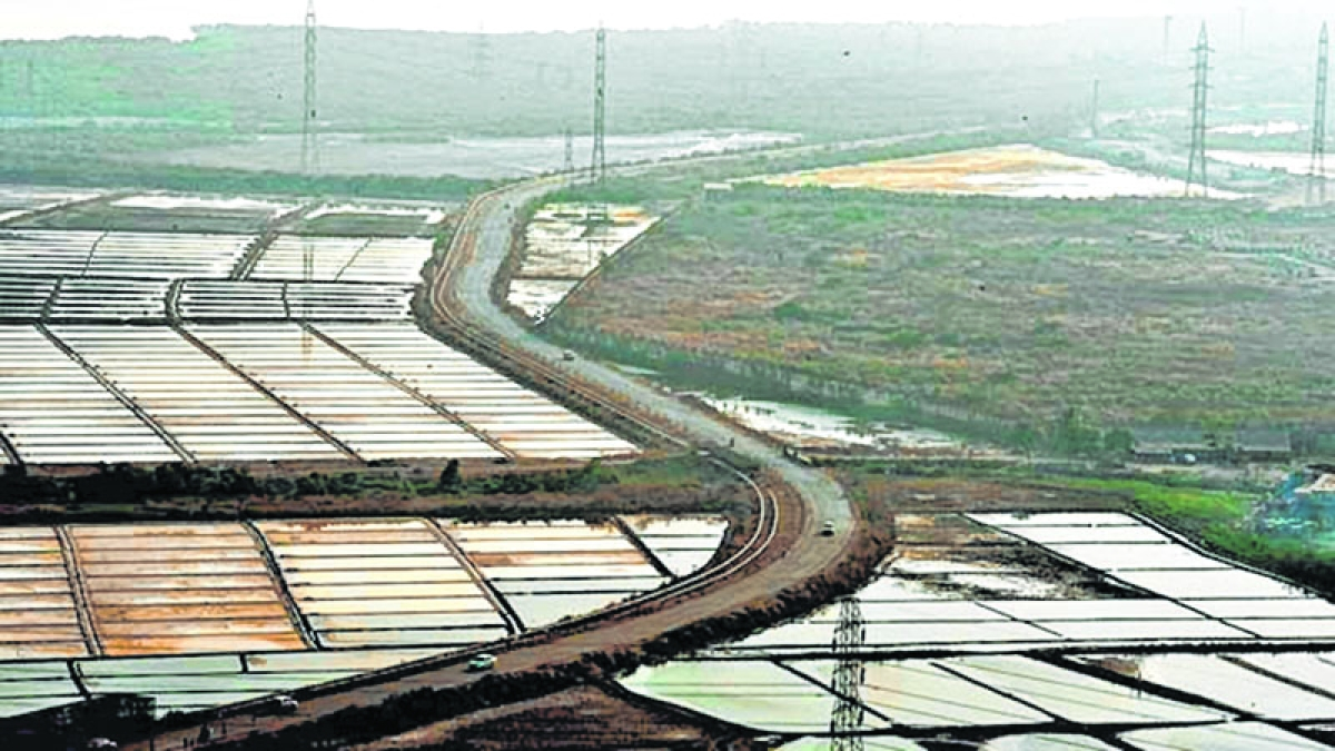 Mumbai DP-2034: Shiv Sena against opening of salt pans for housing
