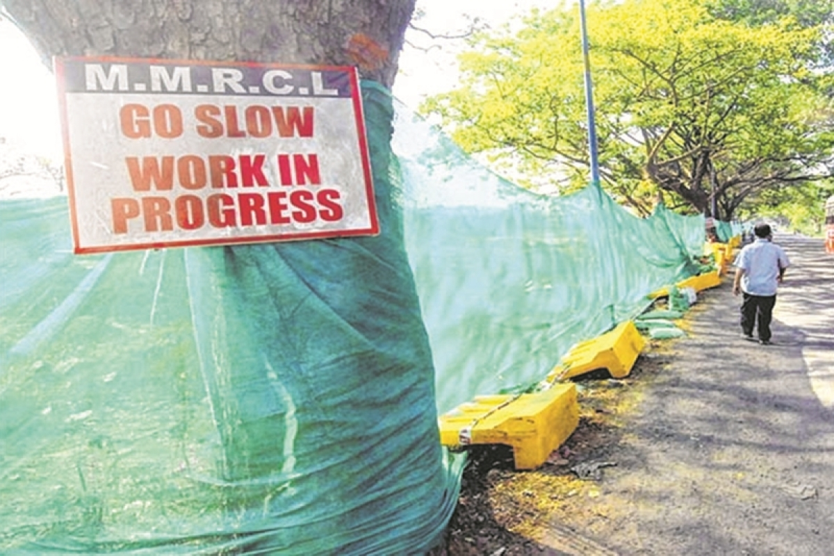 Mumbai: No tree felling until new authority ready