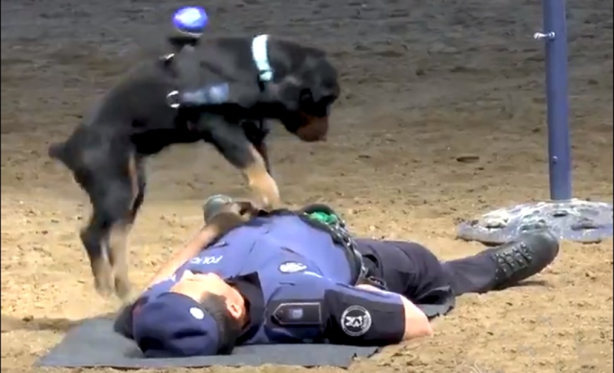 Viral Video! Watch police dog gives 'CPR' to a Spanish cop