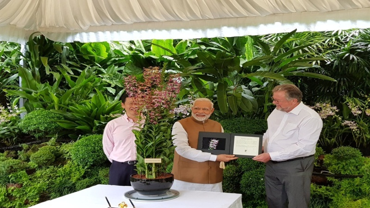 Orchid named after PM Narendra Modi in Singapore
