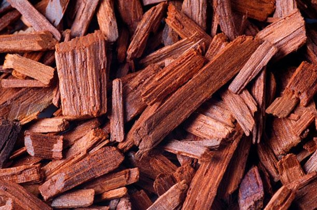 2 arrested with red sandalwood worth Rs 1.34 crore